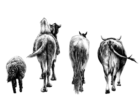 set of animals from the back of a sheep camel horse and the cow and the ass go ahead , sketch vector graphics monochrome illustration on white background 일러스트