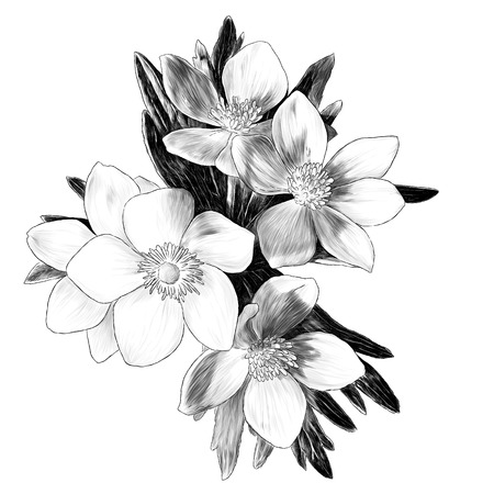 flowers anemone with leaves bouquet branch, sketch vector graphics monochrome illustration on white background