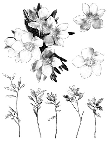 flowers anemone with leaves bouquet branch set of multiple elements sketch vector graphics monochrome illustration on white background