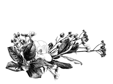 flower arrangement of Magnolia branches and dry grass, sketch vector graphics monochrome illustration on white background