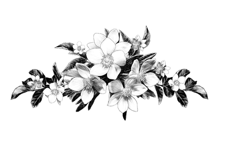 flower arrangement of anemone branches with leaves, sketch vector graphic monochrome illustration on white background