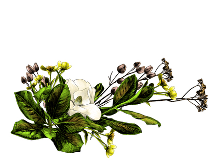 flower arrangement of Magnolia branches and dry grass, sketch vector graphics color illustration on white background