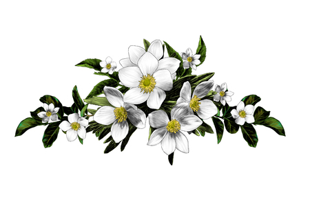 flower arrangement of anemone branches with leaves, sketch vector graphic color illustration on white background Ilustracja