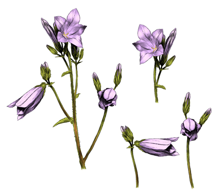 set di fiori di rami di campana, illustrazione grafica vettoriale di schizzo a colori su sfondo bianco