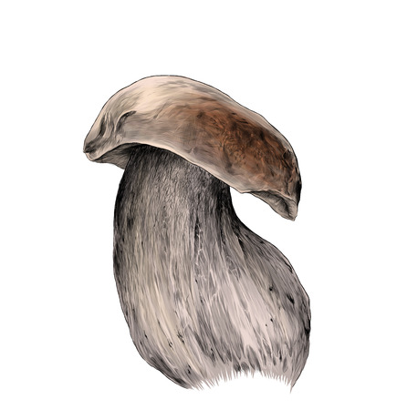 white mushroom on thick stem, sketch vector graphic color illustration on white background