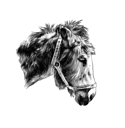 ass muzzle with straps in profile, sketch vector graphic monochrome illustration on white background 일러스트
