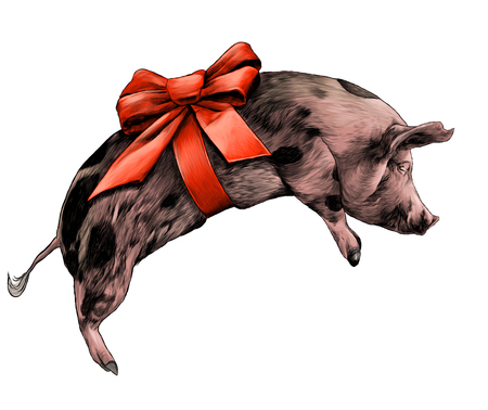 Christmas pig with bow on torso lying on side sketch vector graphic color illustration on white background Ilustracja