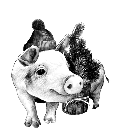 Christmas pig in a warm hat with a pompom stands near a small decorative Christmas tree, sketch vector graphics monochrome illustrations on white background