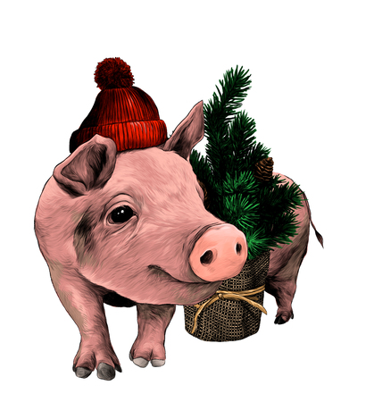 Christmas pig in a warm hat with a pompom stands near a small decorative Christmas tree, sketch vector graphic color illustration on white background