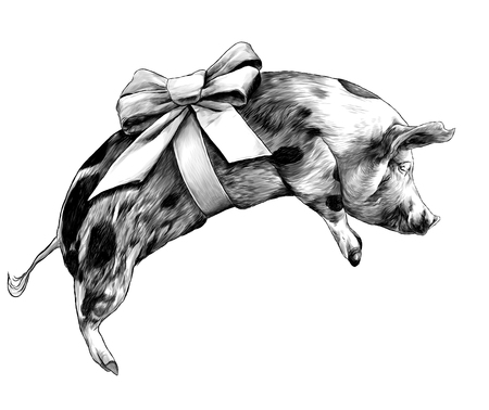 Christmas pig with bow on torso lying on side sketch vector graphics monochrome illustration on white background Illustration