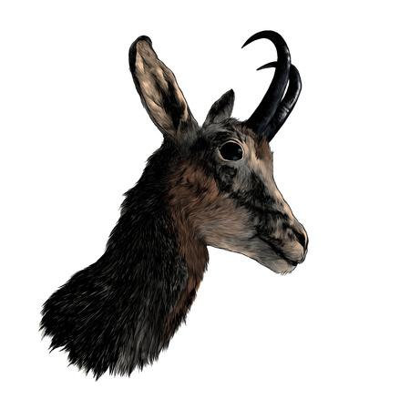 Testa di cervo di capriolo nel profilo, illustrazione a colori grafica vettoriale di schizzo su sfondo bianco