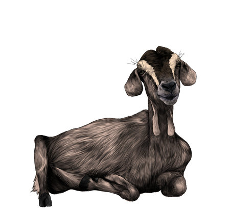 girl goat with hanging from the bottom of the muzzle lies , sketch vector graphics color illustration on white background