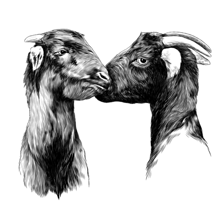two heads of the goats, a boy and a girl touch each other a nice kiss, sketch vector graphics monochrome illustration on white background