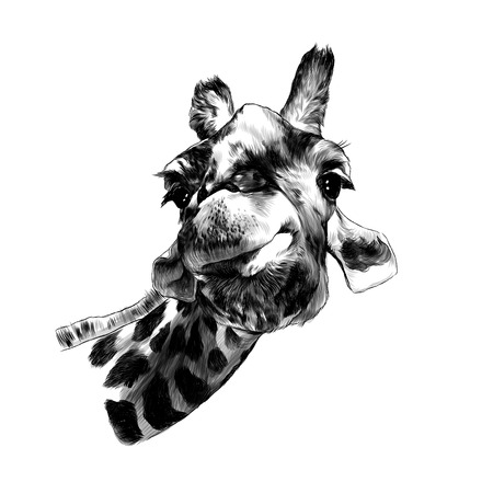 giraffe head funny expression muzzle funny, sketch vector graphics monochrome illustration on white background
