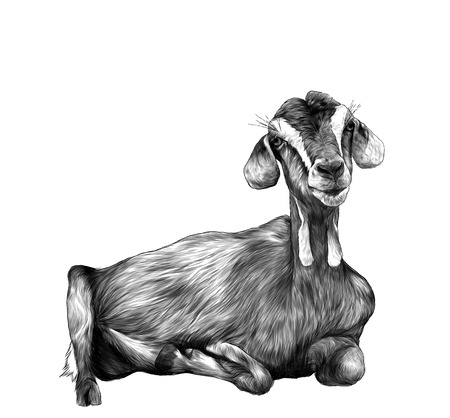 girl goat with dangles from the bottom of the muzzle lies , sketch vector graphics monochrome illustration on white background