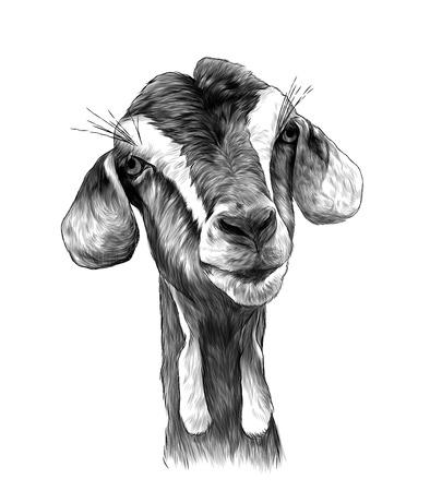 Chica cabeza de cabra con colgantes en la parte inferior del hocico, boceto ilustración monocroma de gráficos vectoriales sobre fondo blanco.