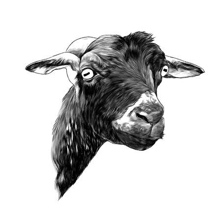 goat head sketch vector graphics monochrome illustration on white background