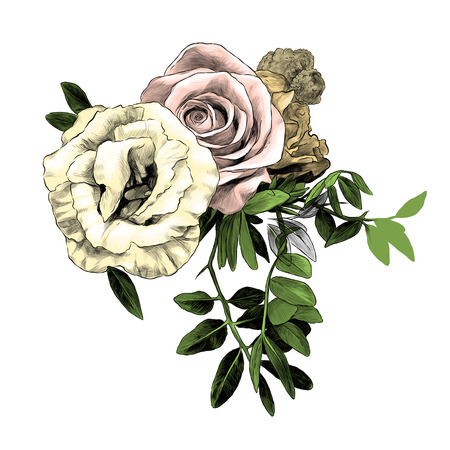 flower arrangement of roses and small leaves, sketch vector graphic color illustration on white background