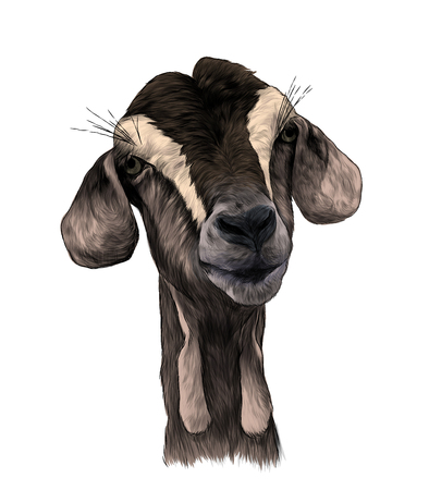 goat head girl with dangles on the bottom of the muzzle, sketch vector graphics color illustration on white background