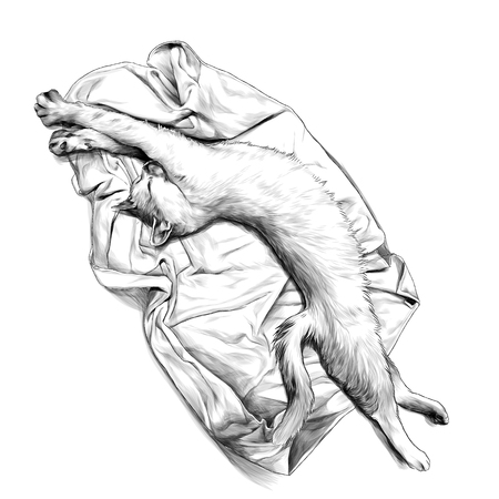 cat lying on towel or blanket stretched and just woke up, sketch vector graphic monochrome illustration on white background Çizim