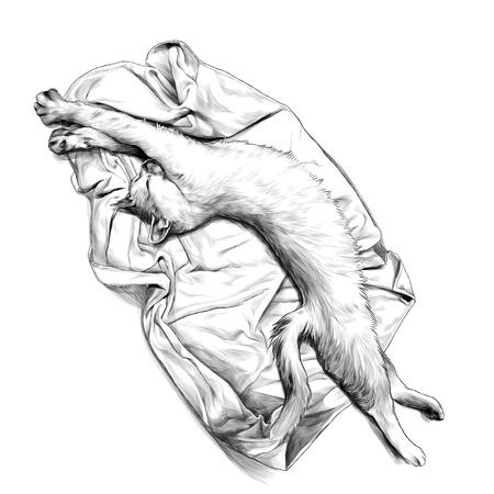 chat allongé sur une serviette ou une couverture étirée et juste réveillé, croquis illustration monochrome graphique vectorielle sur fond blanc Vecteurs