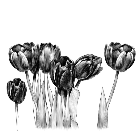 bouquet of tulips, sketch vector graphics monochrome illustration on white background