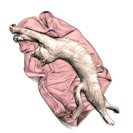 Gato acostado sobre una toalla o una manta estirada y acaba de despertar, boceto ilustración gráfica vectorial en color sobre fondo blanco.
