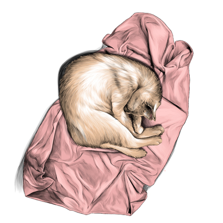 cat curled up in a ball and sleeping on a towel or blanket top view , sketch vector graphic color illustration on white background