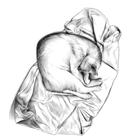 cat curled up in a ball and sleeping on a towel or blanket top view , sketch vector graphics monochrome illustration on white background