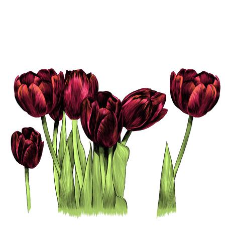 boeket tulpen, schets grafische kleurenillustratie op witte achtergrond