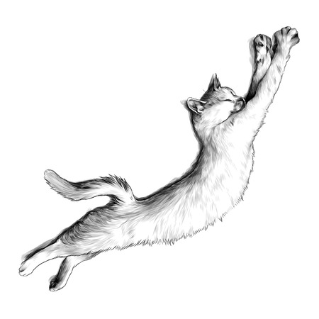 cat just woke up and stretched top view, sketch graphics monochrome illustration on white background
