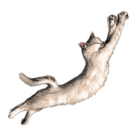 cat just woke up and stretched top view, sketch vector graphic color illustration on white background
