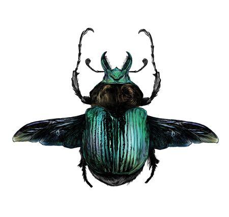 Kann Skarabäus mit Flügeln Draufsicht, Skizze Vektorgrafik Farbdarstellung auf weißem Hintergrund Wanzen
