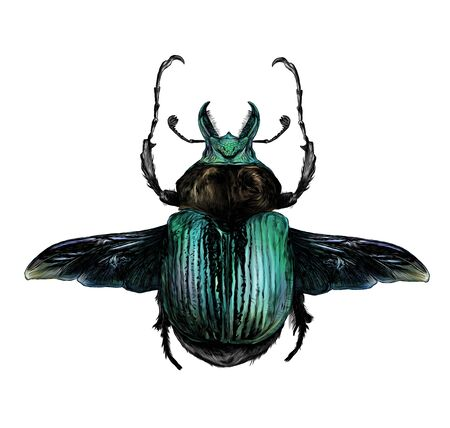 may bug scarab with wings top view, sketch vector graphic color illustration on white background