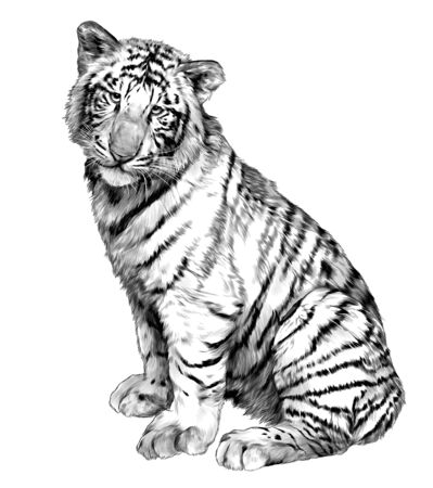tiger sitting full length, sketch vector graphics monochrome illustration on white background