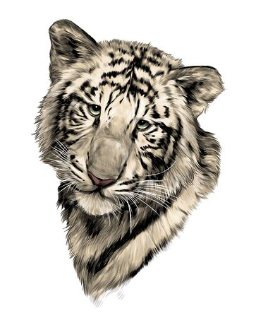 tiger face, sketch vector graphic color illustration on white background