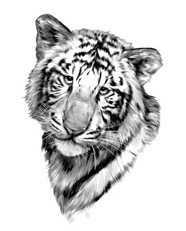 tiger face, sketch vector graphics monochrome illustration on white background