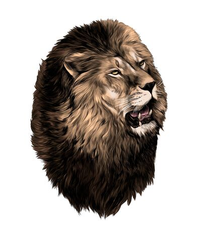 lion head with open mouth looking to the side, sketch vector graphic color illustration on white background