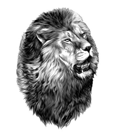lion head with open mouth looking to the side, sketch vector graphic monochrome illustration on white background