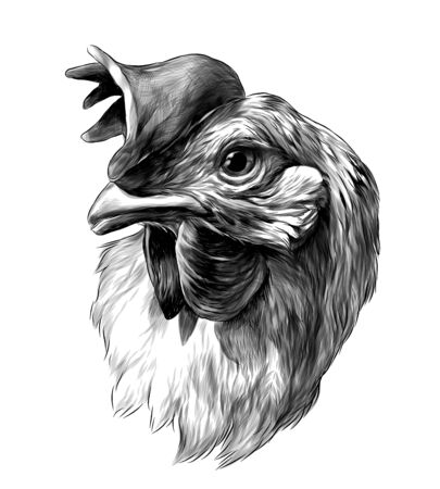 cock head sketch vector graphics monochrome illustration on white background