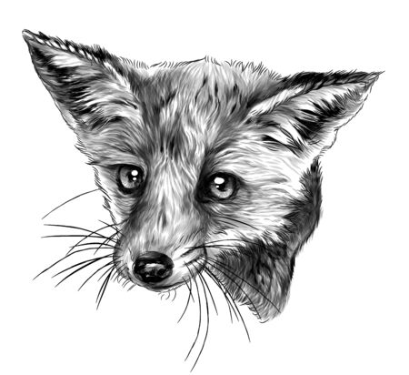 Fox head looks straight full face, sketch vector graphics monochrome illustration on white background