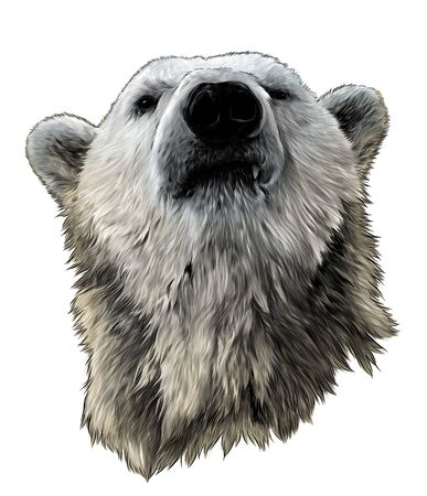 proud bear head looking confidently forward, sketch vector graphics color illustration on white background
