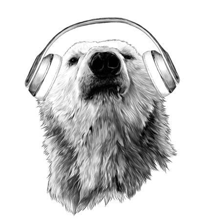 proud bear head looking confidently forward with headphones, sketch vector graphics monochrome illustration on white background