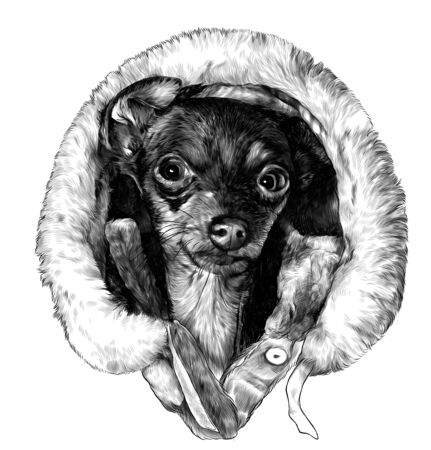 the head of the dog breed of the Terrier in a winter hood with fur around the edges smiles, sketch vector graphics monochrome illustration on white background