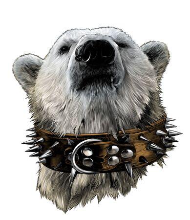la tête d'un ours fier regardant vers l'avant avec confiance dans un collier en cuir avec des pointes en métal et une boucle d'oreille dans le nez, croquis illustration couleur de graphiques vectoriels sur fond blanc