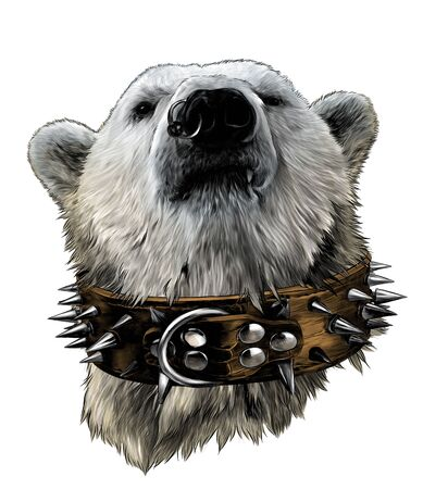 the head of a proud bear looking confidently forward in a leather collar with metal spikes and an earring in the nose, sketch vector graphics color illustration on a white background