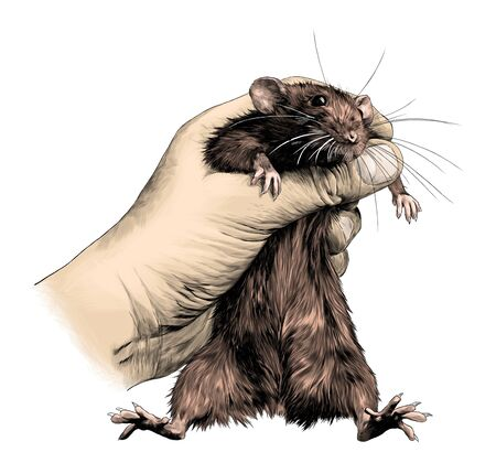 mouse clenched in fist and holding on weight, sketch vector graphics color illustration on white background Vector Illustration