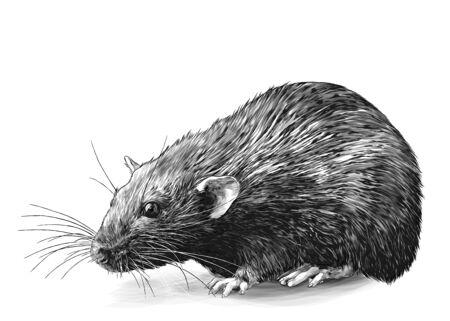 mouse sitting full length sketch vector graphics monochrome illustration on white background