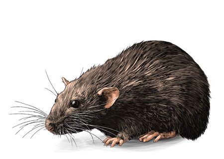 mouse sitting full length sketch vector graphics color illustration on white background