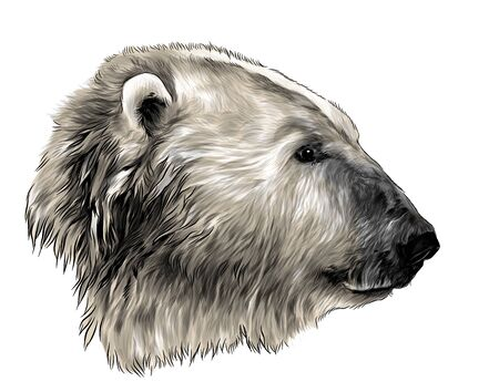 polar bear head in profile, sketch vector graphics color illustration on white background Çizim